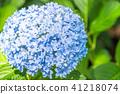 繡球花 花朵 花 41218074