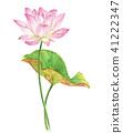 연, 연꽃, 연화 41222347