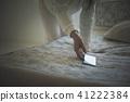 智能手機 智慧手機 智慧型手機 41222384