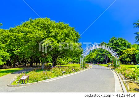 도쿄 봄의 요요 기 공원 41224414