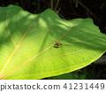 แมง,แมลง,ธรรมชาติ 41231449