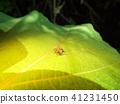 แมง,แมลง,ธรรมชาติ 41231450