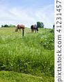equine, horse, farm 41231457