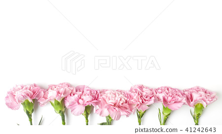 carnations flower for Mother's day 41242643
