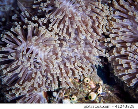 Soft coral reef 41243829
