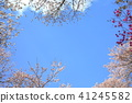 blue, sky, cherry 41245582