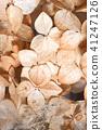 Dried hydrangea flowers close-up 41247126