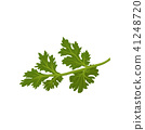 Flat vector icon of fresh green cilantro. Natural condiment. Annual herb used in cooking. Ingredient 41248720