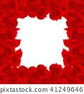 Red Carnation Flower Border, Dianthus caryophyllus 41249646