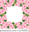 Pink Alcea Rosea Border - hollyhocks 41249652