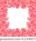 Pink Carnation Flower Border Dianthus caryophyllus 41249657