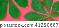 green, leaves, pattern 41250687
