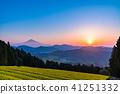 """""""靜岡縣""""富士山和茶園的早晨景色 41251332"""