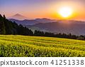 富士山 清水 茶園 41251338
