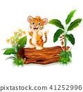 卡通 老虎 虎 41252996