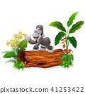 Cute baby gorilla posing on tree stump  41253422