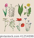 flower, tulip, chamomile 41254096