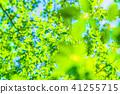 翠綠 鮮綠 初夏 41255715