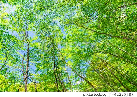 Fresh green eco image 41255787