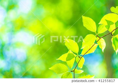 Fresh green eco image 41255817
