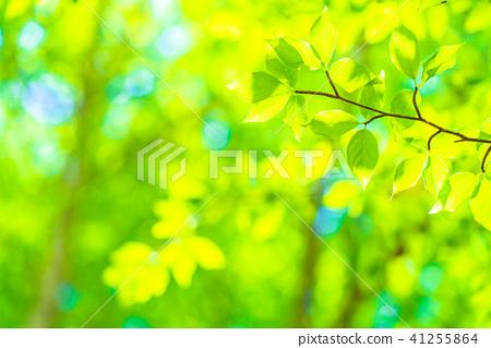 新鮮的綠色生態形象 41255864