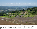 terraced, rice-fields, agriculture 41258719