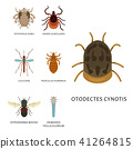 skin, insect, disease 41264815