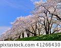 Hinoki Uchikawa櫻花 41266430