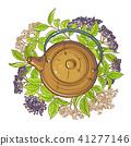 elderberry tea illustration 41277146