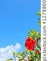 沖繩藍天和木槿 41278860