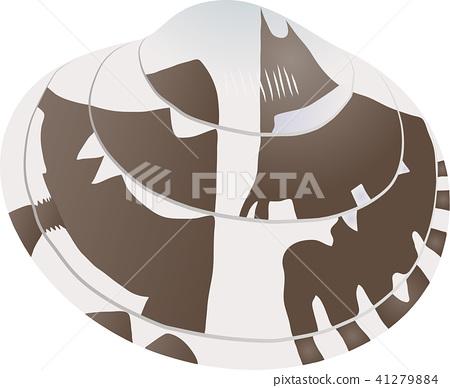 หอย,เก็บหอย,อาหาร 41279884