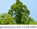 식물, 나무, 자연 41281886
