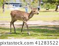 Deer in Nara Park 41283522