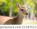 나라 공원의 사슴 41283523