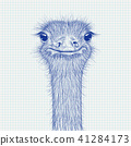 Ostrich sketch. Head closeup on lined paper background 41284173