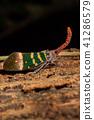 Fulgorid bug fly on the tree. Close up. 41286579