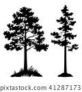 Pine Trees Black Silhouette 41287173