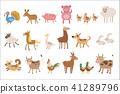 chicken sheep dog 41289796