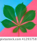 green, leaves, pattern 41293758