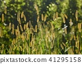 Meadow with backlit green plants 41295158