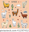 Set of cute Alpaca Llamas or wild guanaco on the background of Cactus and mountain. Funny smiling 41297432