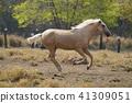 一匹馬 41309051