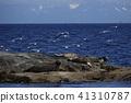 海狗 海洋动物 哺乳动物 41310787