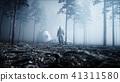 森林 树林 夜晚 41311580