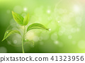 Growing sprout on green background 41323956