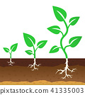 The stage of growth of a sprouts 41335003