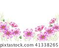 코스모스, 가을, 꽃잎 41338265