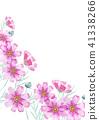 코스모스, 가을, 꽃잎 41338266