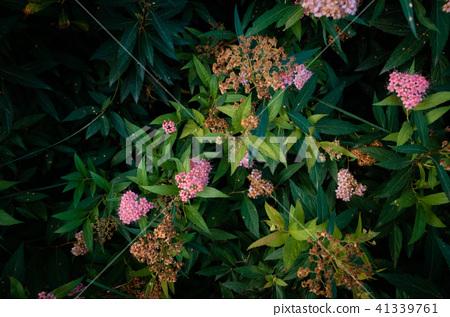 花卉植物,香味,牆紙 41339761