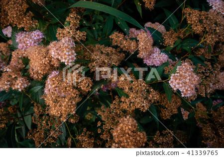 花卉植物,香味,牆紙 41339765